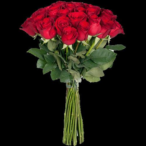 premium_red_rose.png